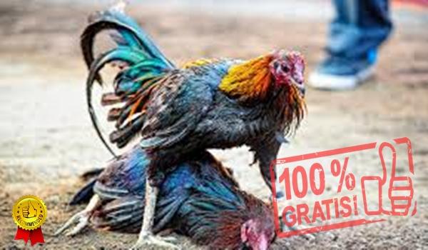 Rahasia Menang Judi Ayam S128